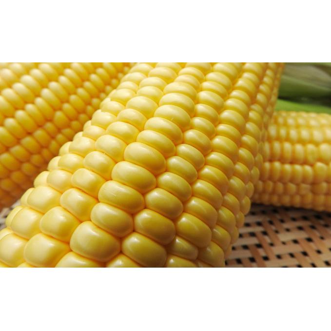 【ふるさと納税】小澤さん家のゴールドラッシュ(とうもろこし)約10kg ※産地直送なので土などがついてる場合もあります。 【野菜・とうもろこし】 お届け:2020年6月上旬~7月上旬