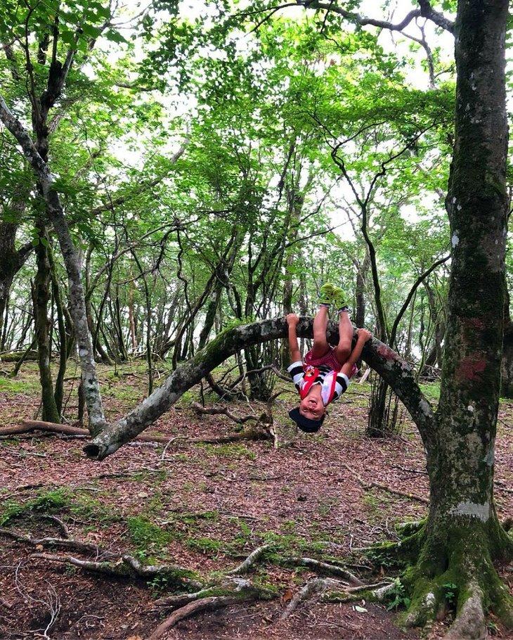 【ふるさと納税】籠坂峠と大洞山トレッキング・天狗ブナの原生林を歩く
