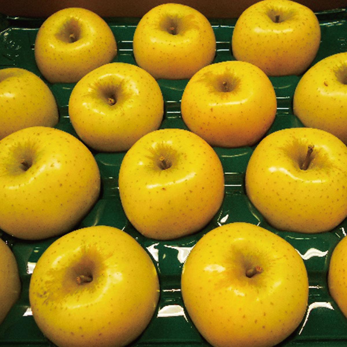 【ふるさと納税】【先行予約】≪10月上旬~順次発送≫朝採りシナノゴールド(林檎) 5kg【果物類・フルーツ・りんご・リンゴ】