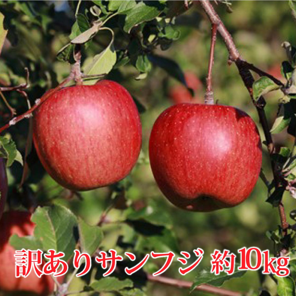 【ふるさと納税】【先行予約】≪11月上旬~順次発送≫サンふじ 約10kg(訳あり)【果物類・林檎・りんご・リンゴ】