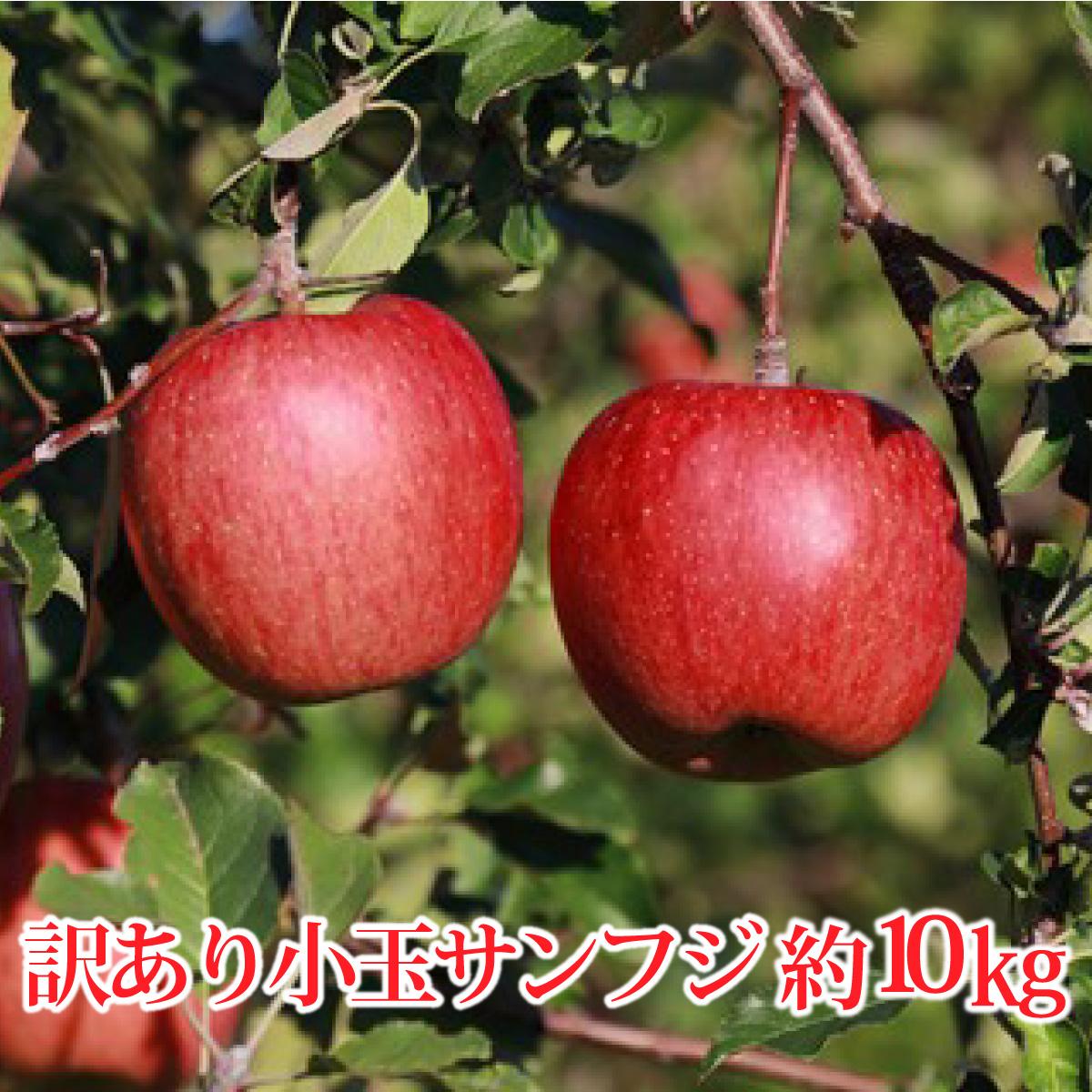 【ふるさと納税】【先行予約】≪11月上旬~順次発送≫サンふじ 小玉 約10kg(訳あり)【果物類・林檎・りんご・リンゴ】