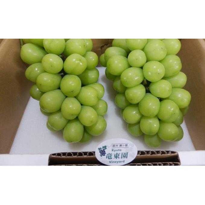 長野県駒ヶ根市 ふるさと納税 シャインマスカット 2房 果物 新商品 物品 新型 ぶどう フルーツ ブドウ 葡萄 マスカット お届け:2021年10月上旬~10月下旬