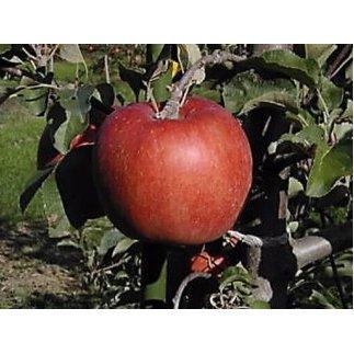 【ふるさと納税】佐久のりんご あいかの香り 約3kg 等級 特選品 【リンゴ/林檎・フルーツ】 お届け:2020年11月1日~11月10日