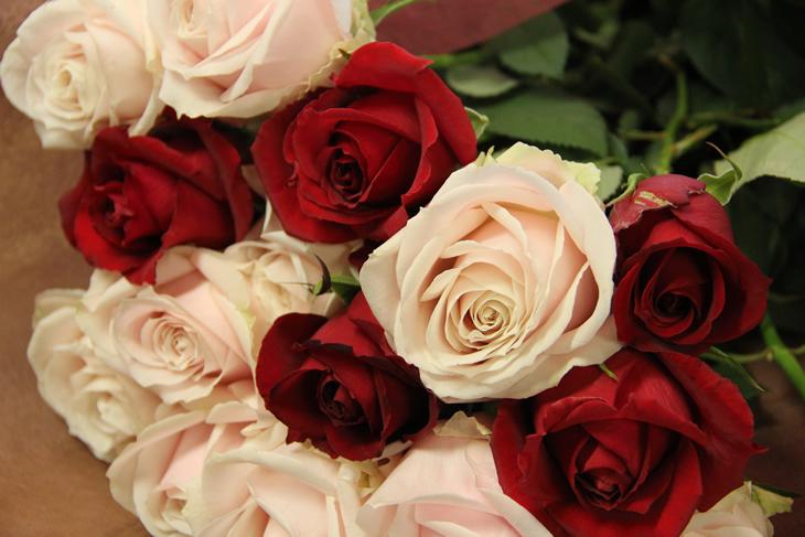 【ふるさと納税】森谷バラ園のバラ, KeyProduction:9a7ad0ef --- vzdynamic.com
