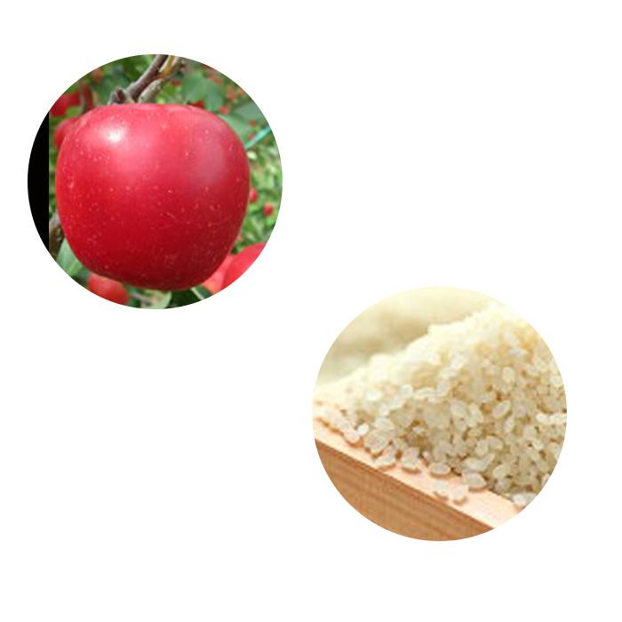【ふるさと納税】特別栽培米コシヒカリ10kg+フジりんご10kgセット 【お米・コシヒカリ・果物類・林檎・りんご・リンゴ】 お届け:2020年11月中旬~12月中旬