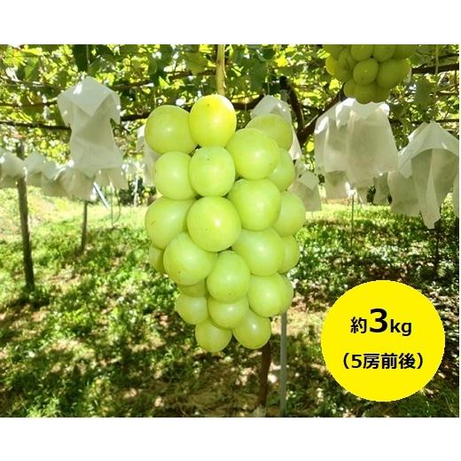 【ふるさと納税】たきざわ果樹園のシャインマスカット約3kg(5房前後) 【果物類・ぶどう・マスカット・フルーツ】 お届け:2020年9月中旬~10月初旬