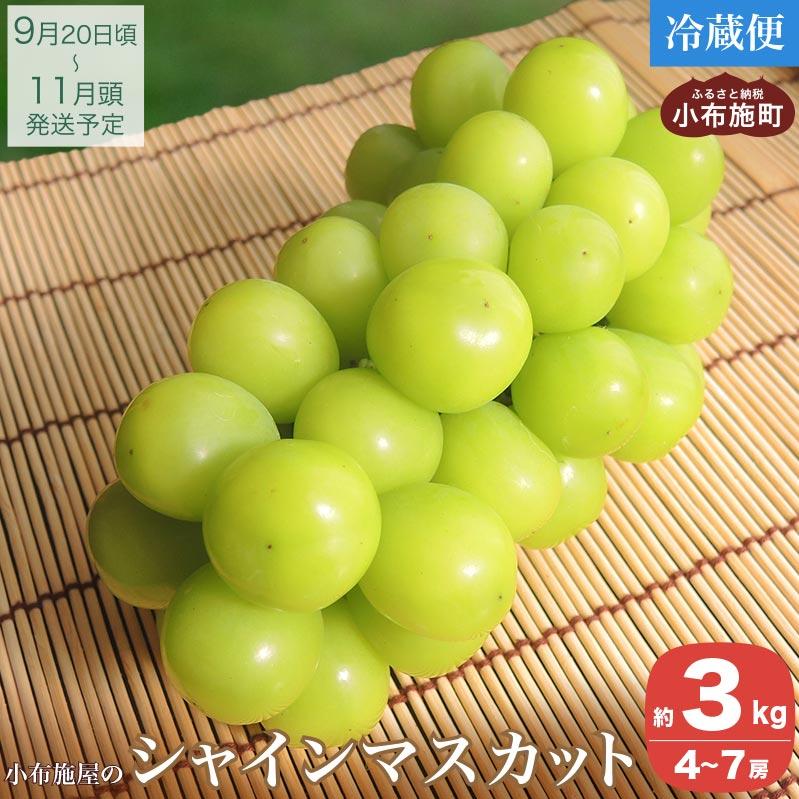 長野県小布施町 【ふるさと納税】シャインマスカット(約3kg)