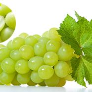 【ふるさと納税】シャインマスカット10P(種なし) 【果物・ぶどう・葡萄・フルーツ】 お届け:2019年9月下旬~10月中旬