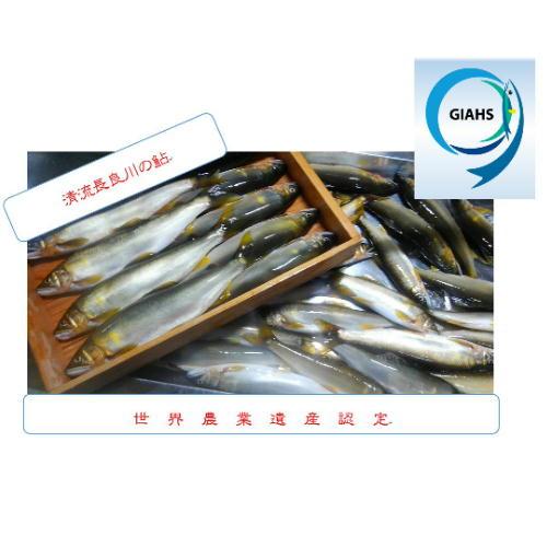 【ふるさと納税】T34-02 鮎釣年間遊漁証