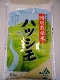 【ふるさと納税】特別栽培米 ハツシモ