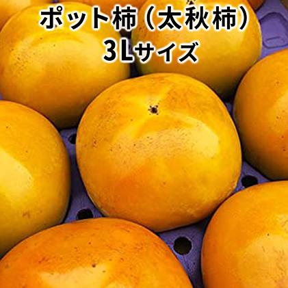 【ふるさと納税】こだわり栽培ポット柿(太秋柿) 3Lサイズ9個入り 【果物類・柿・かき】 お届け:2020年10月中旬~11月上旬