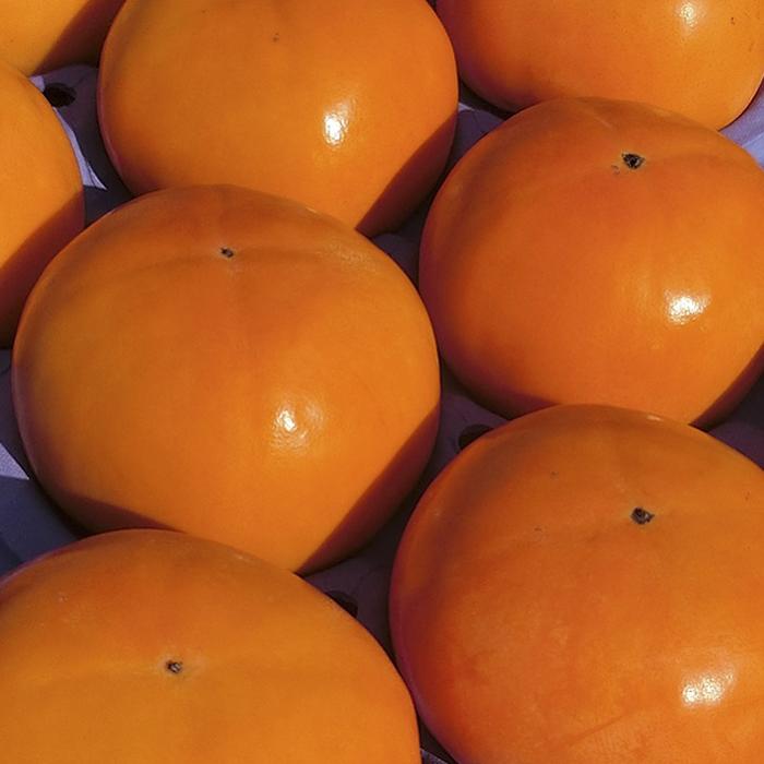 【ふるさと納税】上等富有柿 中玉 24玉 【果物類・柿・かき】 お届け:2020年11月上旬~2020年12月中旬