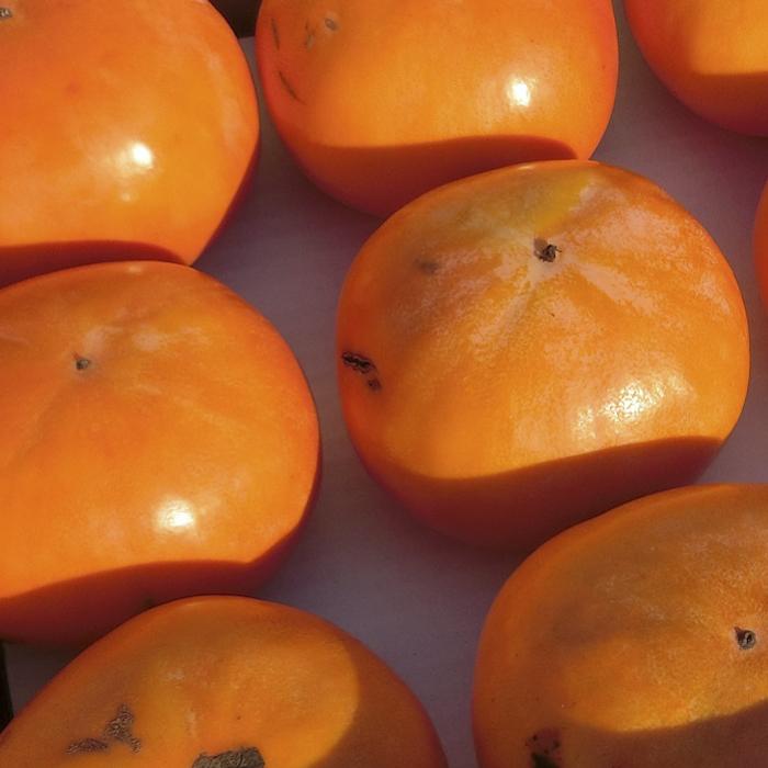 【ふるさと納税】理由あり富有柿 18~28玉 【果物類・柿・かき】 お届け:2020年11月上旬~2020年12月中旬