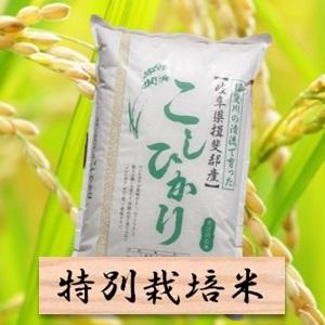 【ふるさと納税】特別栽培米 コシヒカリ 精米10kg(分搗き可)または 玄米(11Kg) 2019年産