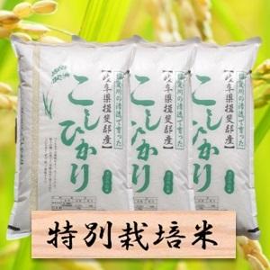 【ふるさと納税】特別栽培米 コシヒカリ 精米30kg(分搗き可)または 玄米(33Kg) 2019年産