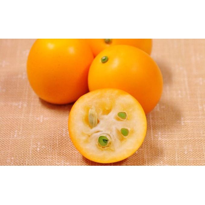 静岡県静岡市 至上 ふるさと納税 2022年2月上旬より順次発送 極上に甘い金柑 清水のこん太 みかん 果物類 お届け:2022年2月上旬~2月下旬 2020A W新作送料無料 フルーツ 柑橘類