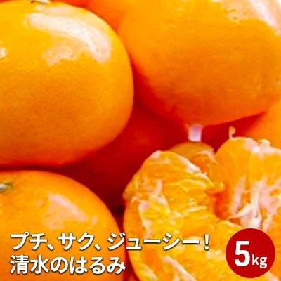 静岡県静岡市 ふるさと納税 2022年2月上旬より順次発送 プチ サク ジューシー フルーツ みかん 激安挑戦中 果物類 清水のはるみ お届け:2022年2月上旬~2月下旬 柑橘類 ブランド激安セール会場