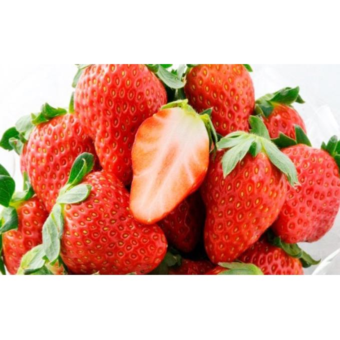 【ふるさと納税】ほっぺたが落ちる『紅ほっぺ』3箱12パック 【果物類・いちご・苺・イチゴ】 お届け:2020年2月上旬~4月中旬