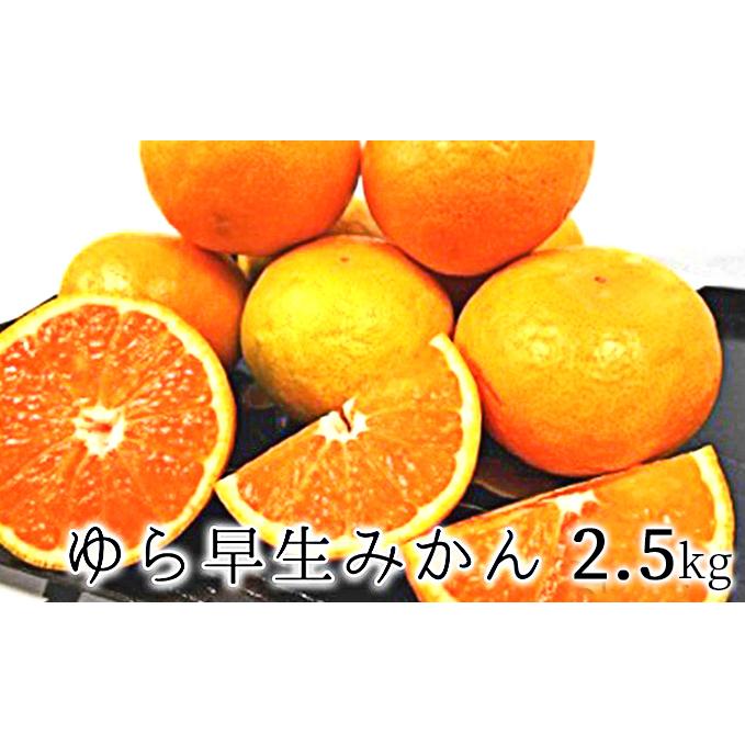 静岡県静岡市 ふるさと納税 2021年10月上旬より順次発送 甘みと酸味がギュッ ゆら早生みかん 超定番 2.5kg 果物類 ミカン みかん 早生みかん 当店は最高な サービスを提供します フルーツ お届け:2021年10月上旬~2021年10月下旬 柑橘類