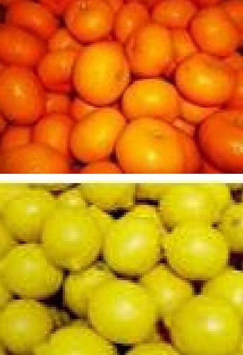 【ふるさと納税】1007みかん&レモンセット