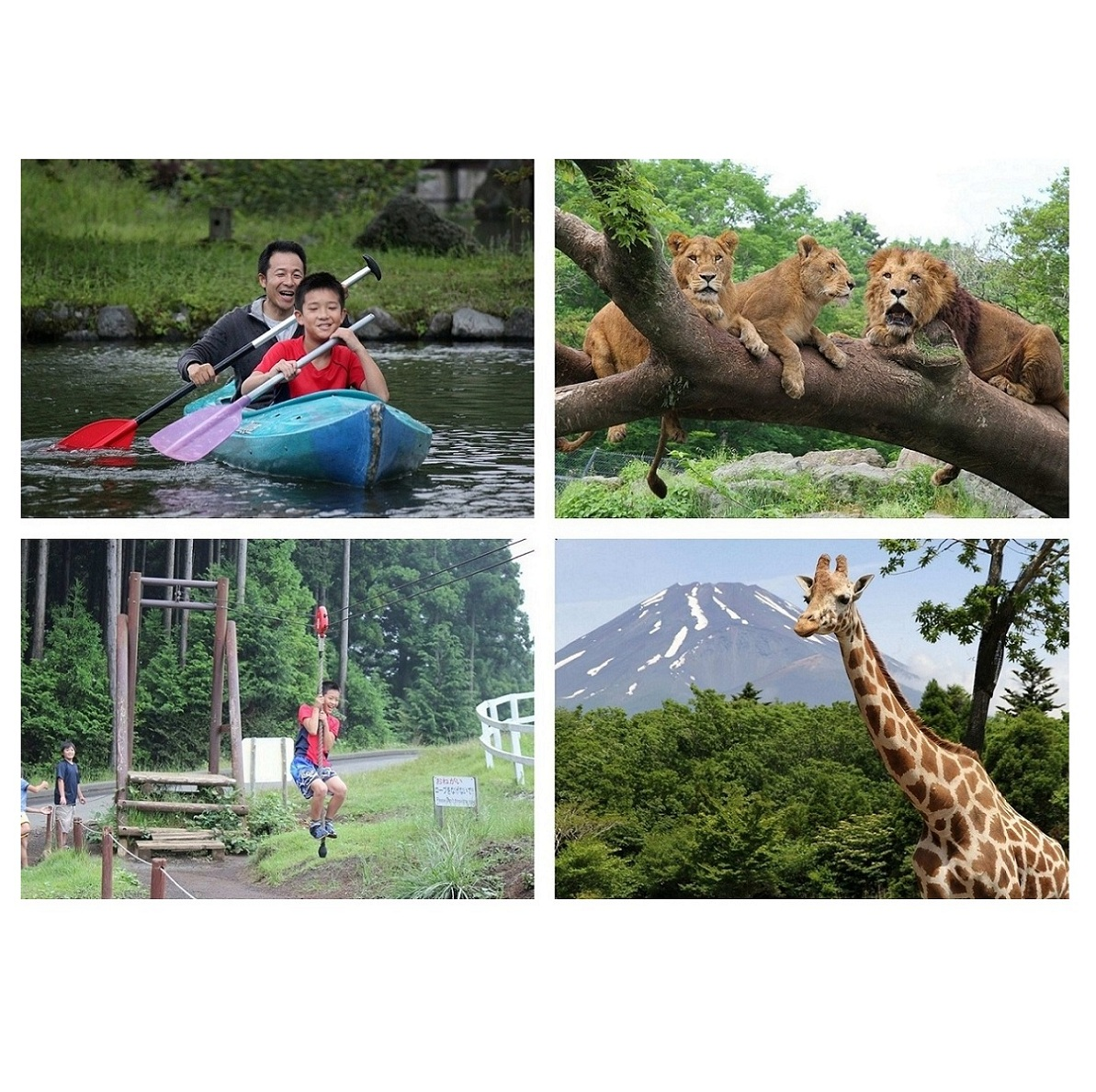 【ふるさと納税】1144富士山こどもの国おとな入園券&富士サファリパーク入園券(各2枚)