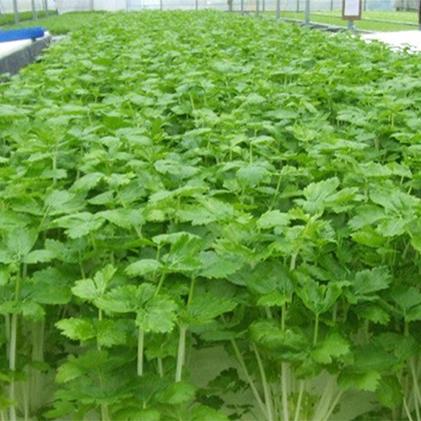 【ふるさと納税】そのまま食べられる!野菜サラダセット24袋 【野菜・詰め合わせ】