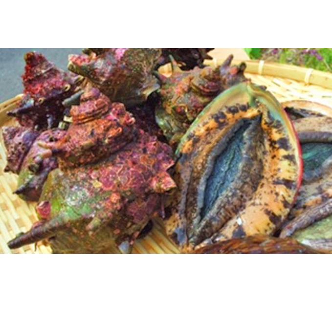 【ふるさと納税】活  アワビ 4月~9月中旬出荷予定 【魚介類·あわび·アワビ·鮑】 お届け:2021年4月~2021年9月中旬