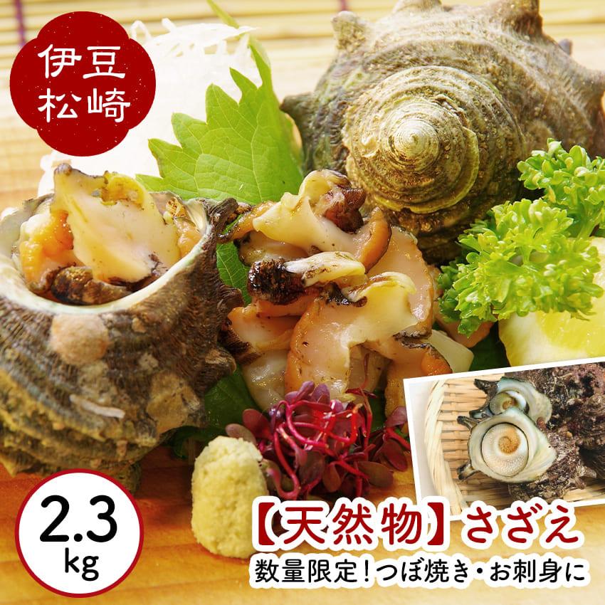さざえ 栄螺 2.5kg 2.5キロ 貝 貝類 魚介 魚介類 海鮮 お刺身 つぼ焼き サザエご飯 天然物 静岡県 伊豆松崎 【ふるさと納税】サザエ(2.5kg)