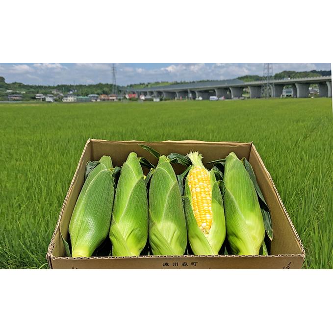【ふるさと納税】大人気!しんちゃん農園の甘~いとうもろこし「甘太郎」(10~11本入り) 【野菜・とうもろこし】 お届け:2020年7月上旬~7月中旬