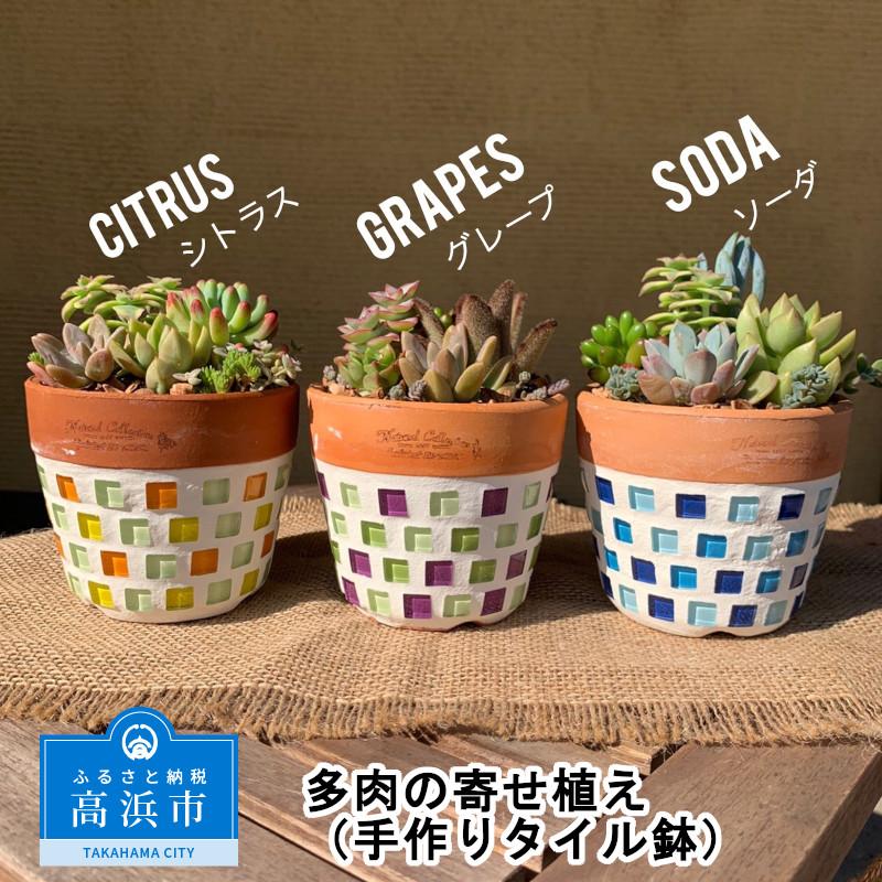 【ふるさと納税】多肉の寄せ植え(手作りタイル鉢)