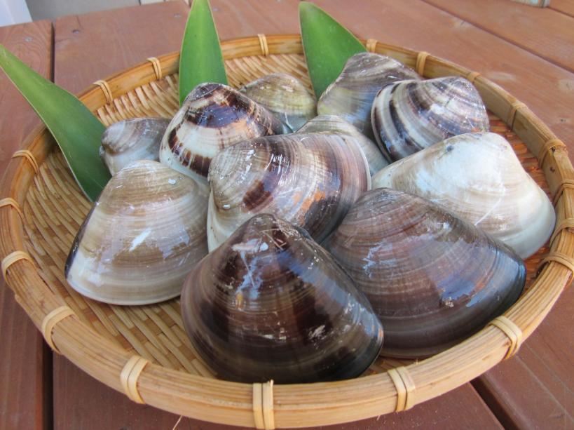 【ふるさと納税】 丸元水産 桑名産蛤(ハマグリ)1.0kg