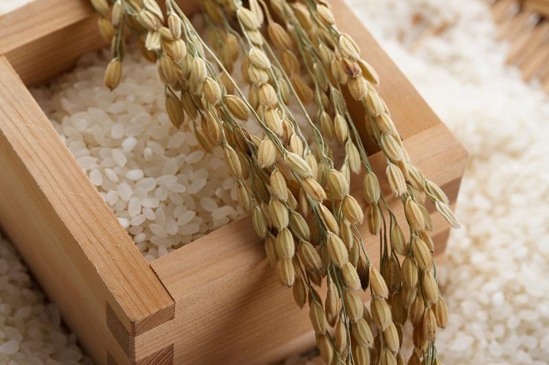 【ふるさと納税】 桑名米商 新米 三重県産コシヒカリ5kg×2袋