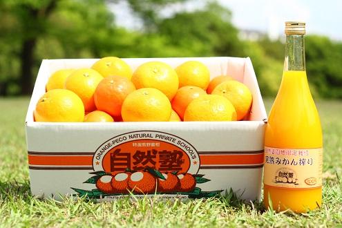 【ふるさと納税】自然塾 みかん&まるごと果汁 定期便 3回