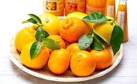 【ふるさと納税】自然塾 季節の柑橘詰合せ【定期便3回】