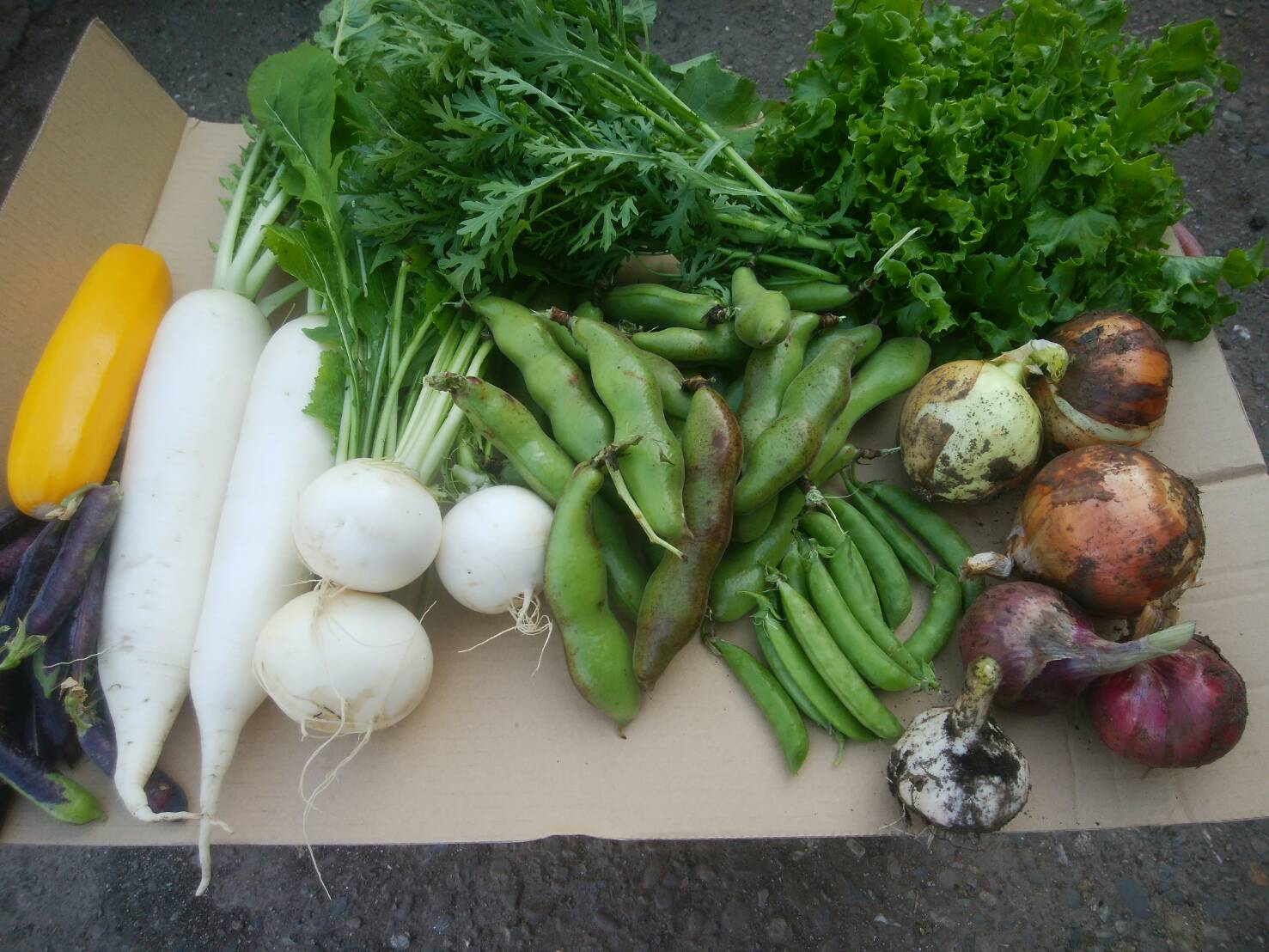 【ふるさと納税】農薬をいっさい使わず栽培した季節の野菜定期便(6回コース) nh-03