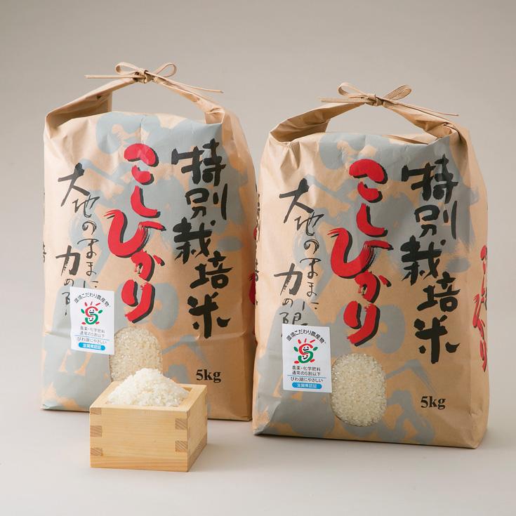 【ふるさと納税】【T-534】よこいファーム 特別栽培米コシヒカリA