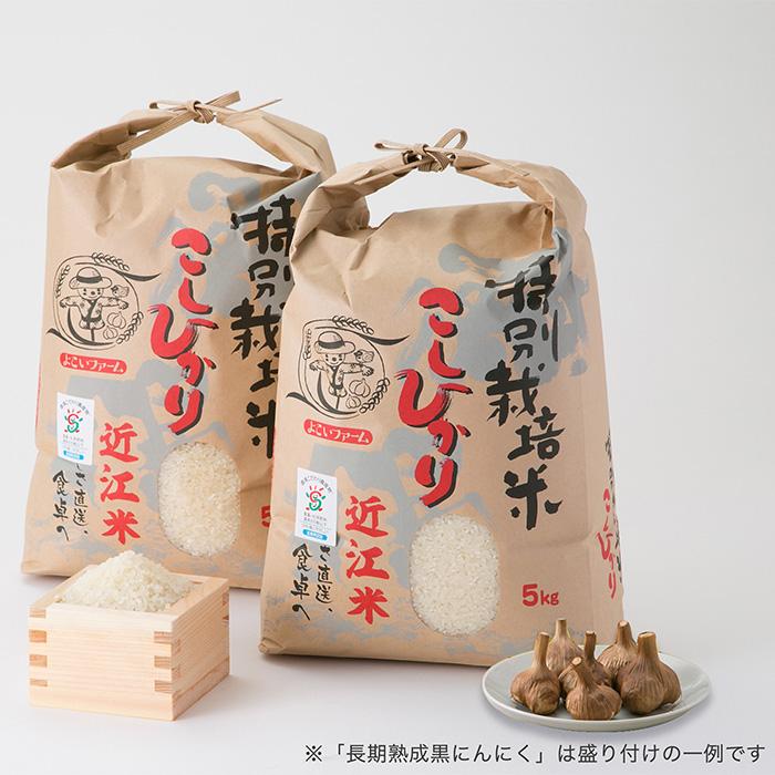 【ふるさと納税】【T-531】よこいファーム 特別栽培米コシヒカリA(黒にんにく付)【頒布会12カ月】