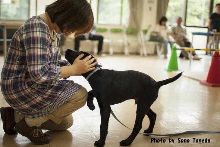 【ふるさと納税】盲導犬訓練支援寄付~「行きたい場所に、安心していける社会に…」~(10,000円)