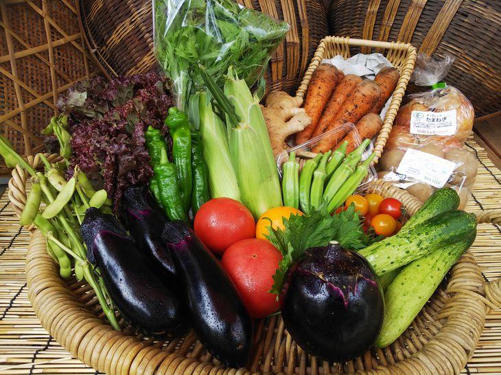 【ふるさと納税】《アスカ有機農園》(栽培期間中農薬・化学肥料不使用)旬の京野菜セットS