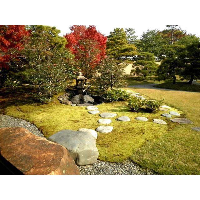 【ふるさと納税】 スナゴケで庭園緑化1平方メートル【スナゴケ】