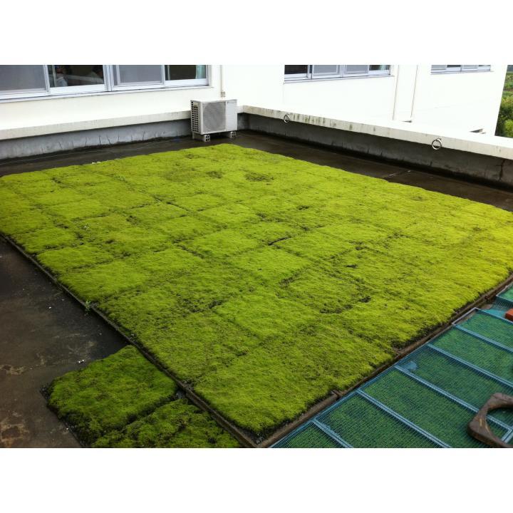 【ふるさと納税】スナゴケで屋上緑化1平方メートル【スナゴケ】
