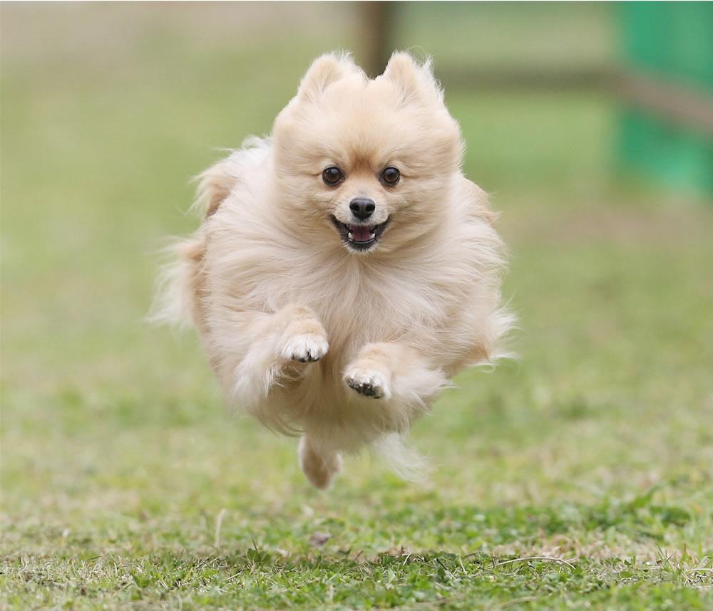 【ふるさと納税】東京お台場ドッグリゾート大江戸温泉物語店 飛行犬撮影所でのワントライ飛行犬撮影