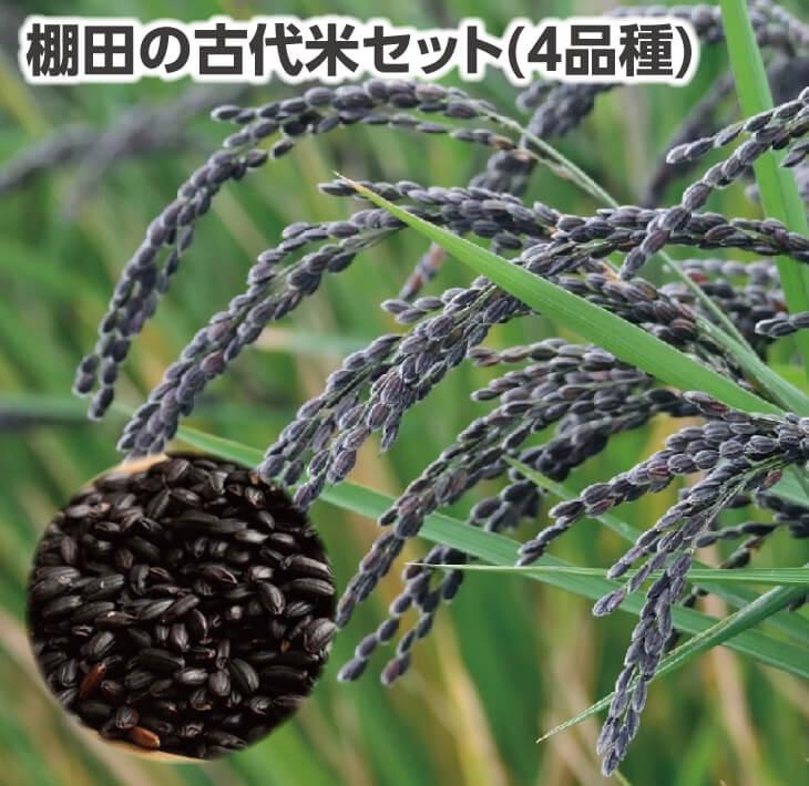 【ふるさと納税】棚田の古代米セット(4品種)