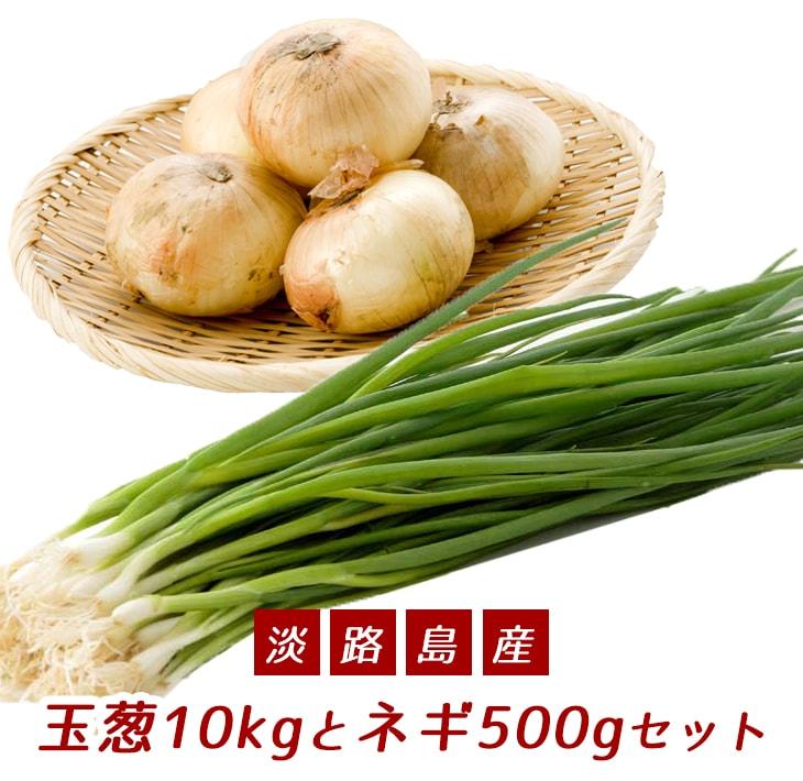 【ふるさと納税】こうめいさんの玉葱10kgとネギ500gセット