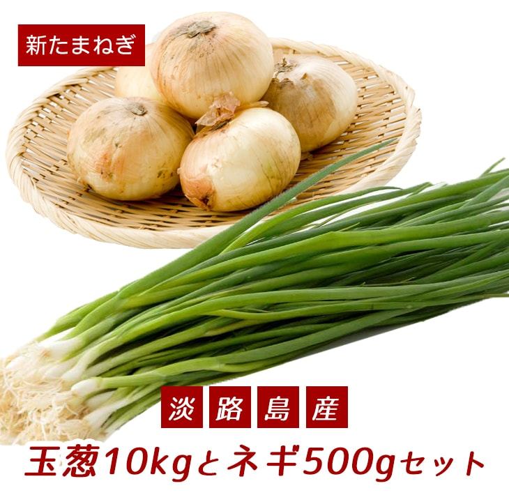 【ふるさと納税】【新たまねぎ】こうめいさんの玉葱10kgとネギ500gセット