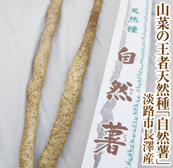 【ふるさと納税】山菜の王者天然種「自然薯」淡路市長澤産