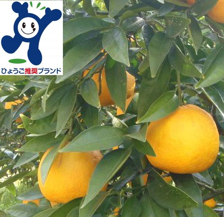 【ふるさと納税】淡路島なるとオレンジ