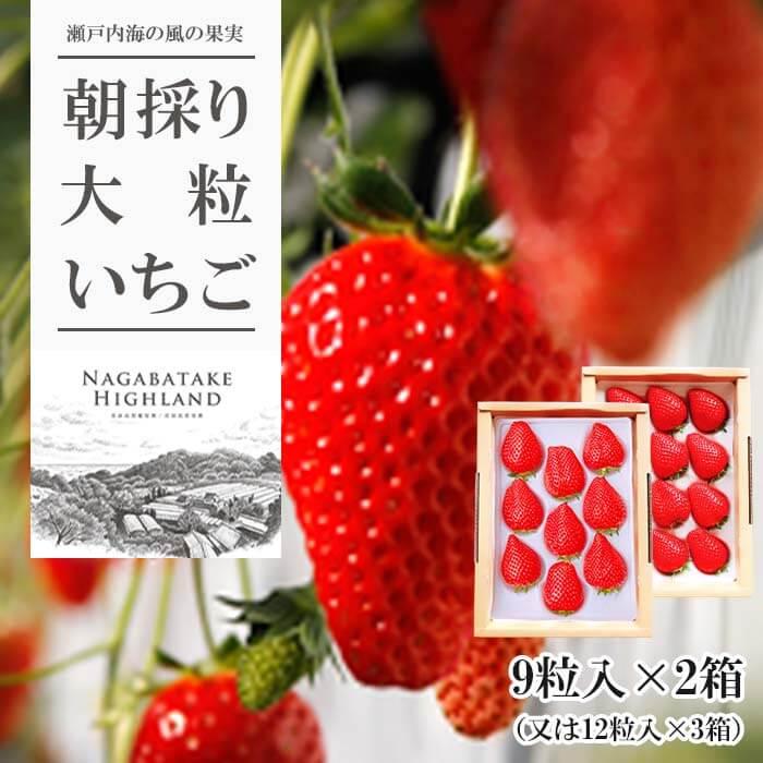 【ふるさと納税】朝採り大粒いちご