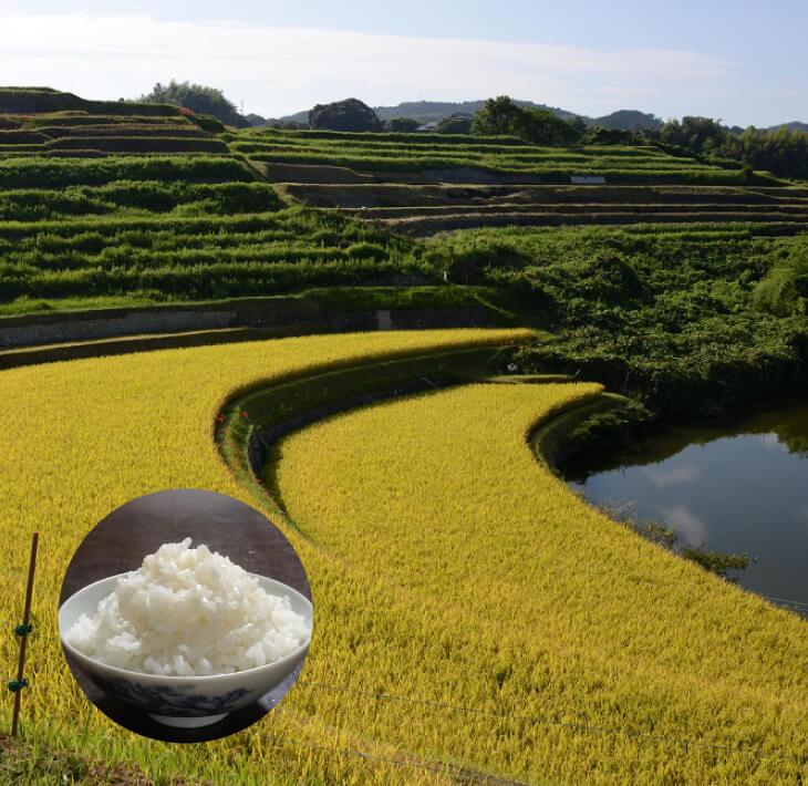 【ふるさと納税】棚田のおいしいお米 6kg