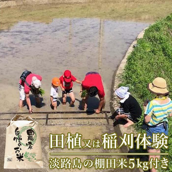 【ふるさと納税】田植又は稲刈体験 棚田のおいしいお米5kg付き